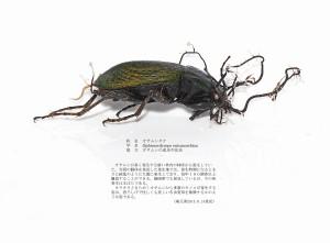 (sample2)オサムシタケ